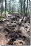 Wild boars damaged trail-2