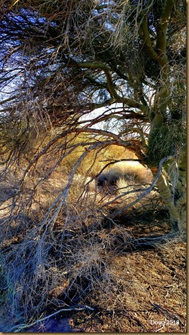 Palo Verde tree and brush