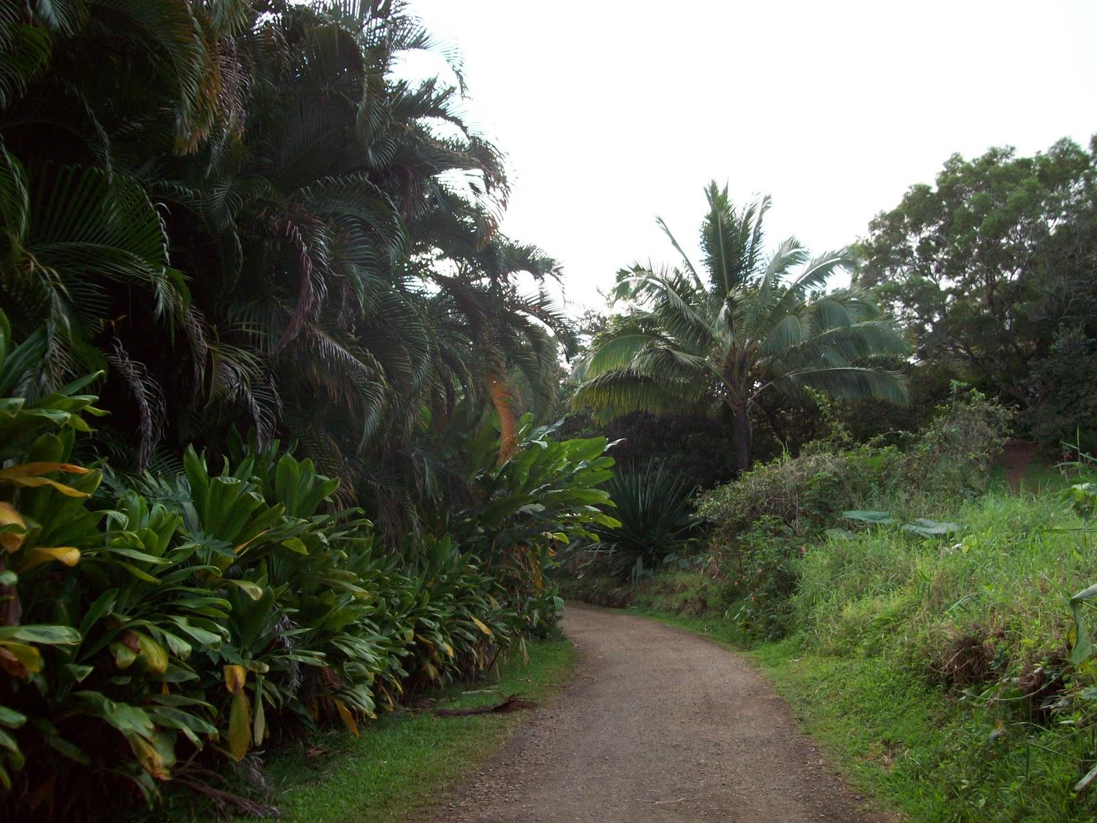 Hawaii Day 5 - 114_1370.JPG