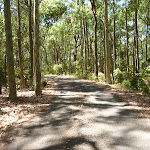 Trail through forest in Blackbutt Reserve (401881)