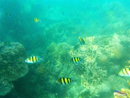 pulau harapan, 23-24 mei 2015 olympus 07
