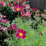 Gardening 2010, Part Three - 101_4442.JPG