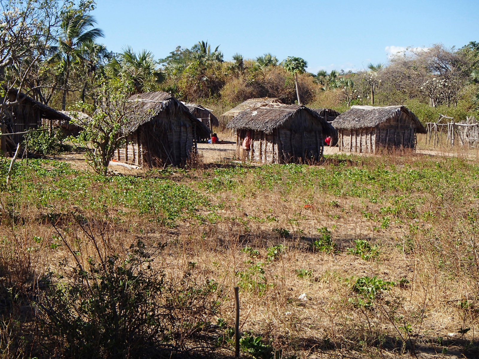 Madagascar9-050.jpg