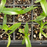 orquidea - DSC02946.JPG