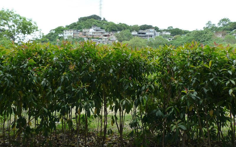 TAIWAN.Taipei TREASURE HILL Un mini quartier réhabilité à 10 mn a pied de gonguan MRT - P1020550.JPG