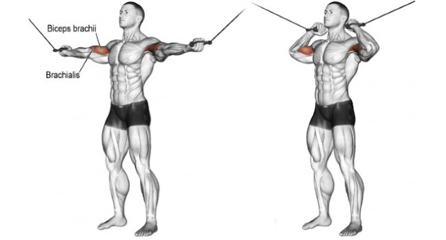 Standing Two Arm High Pulley Cable Curl