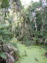 Khao Yai National park - trail to Kong Kaeo
