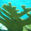 Buck Island Reef - IMGP2367.JPG