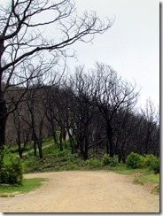 Fire damage at Wayah Bald