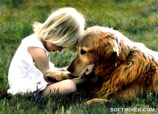 1369047413_dog-1