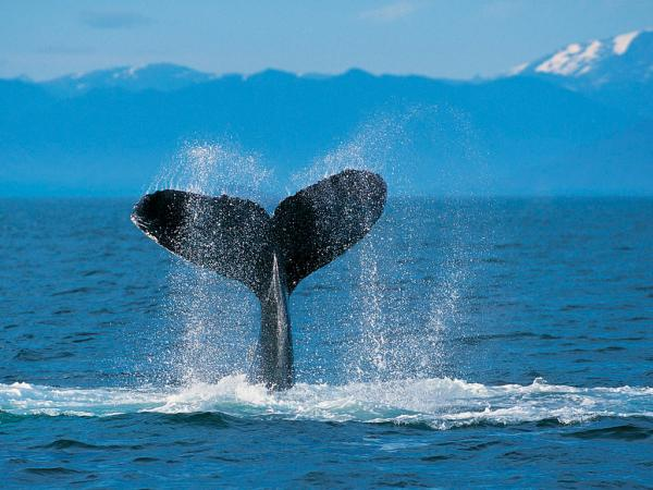 Humpback Whale, Beautiful Places 1