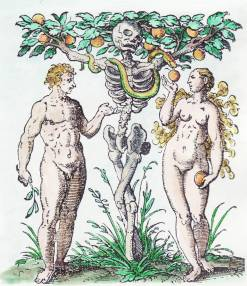 Woodcut By Jost Amman From Jacob Rueff De Conceptu Et Generatione Hominis 1587, Emblems Related To Alchemy