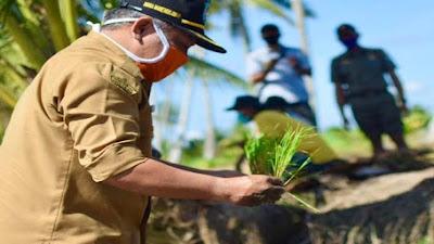 Cegah Stunting, Pemkab Kembangkan Padi Zinc ke Seluruh Kecamatan