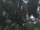 bomen vellen..JPG
