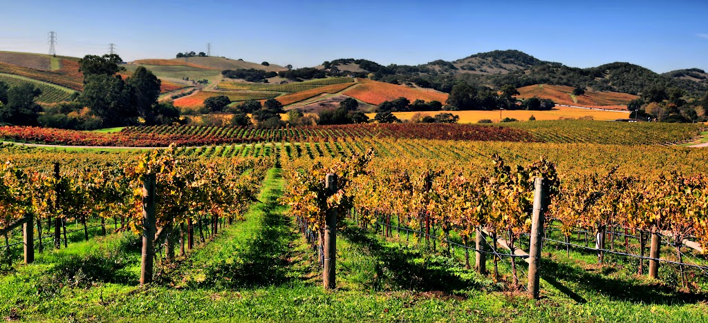 How to navigate Napa's vineyards
