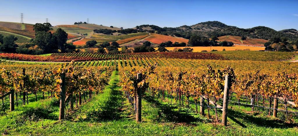 How to navigate Napa's vineyards