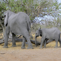 Chobe Game Reserve