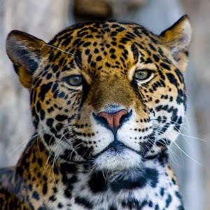 SA Zoo-8516.jpg