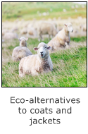sheep - eco-alternatives to coats and jackets