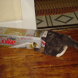 Grace tries to hide in the Coke box.