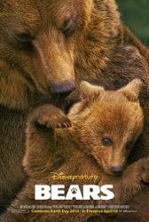 Bears - Gia đình gấu