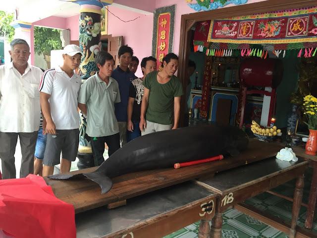 O cemitério de baleias no Vietnã