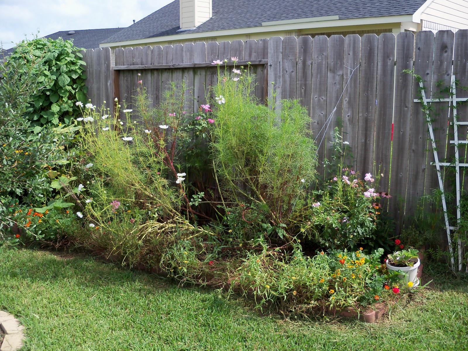 Gardening 2010, Part Three - 101_5160.JPG