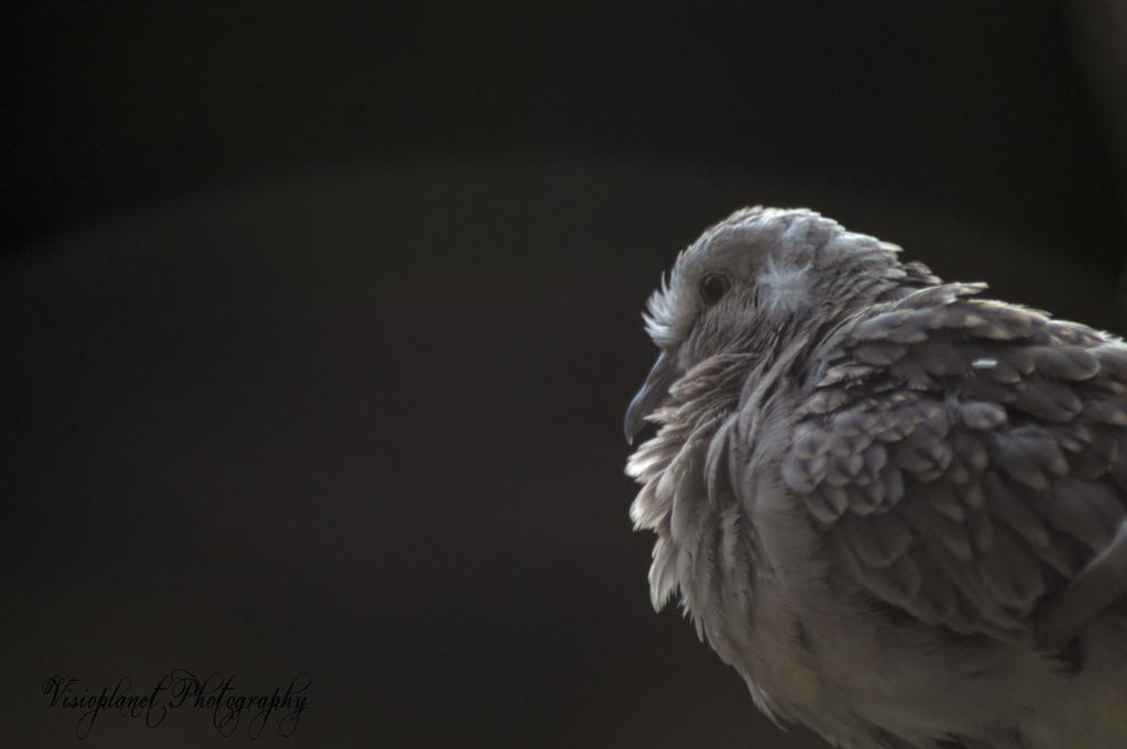 Lovey Dovey by Sudipto Sarkar on Visioplanet