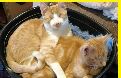 Blind cats seek home after Peterlee rescue