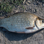 20150822_Fishing_Pyatygory_013.jpg