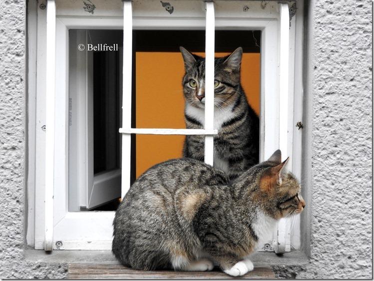Katzen am Fenster 5