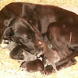 Star & True Blues February 21, 2008 Litter - HPIM0889.JPG