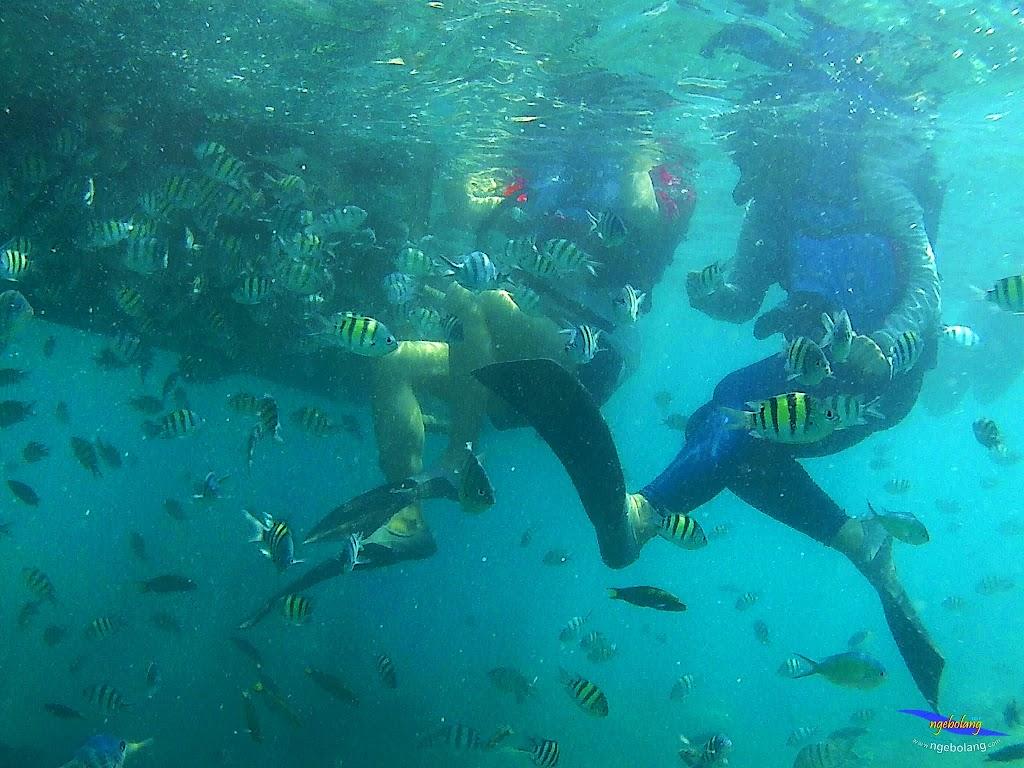pulau harapan, 5-6 september 2015 skc 020
