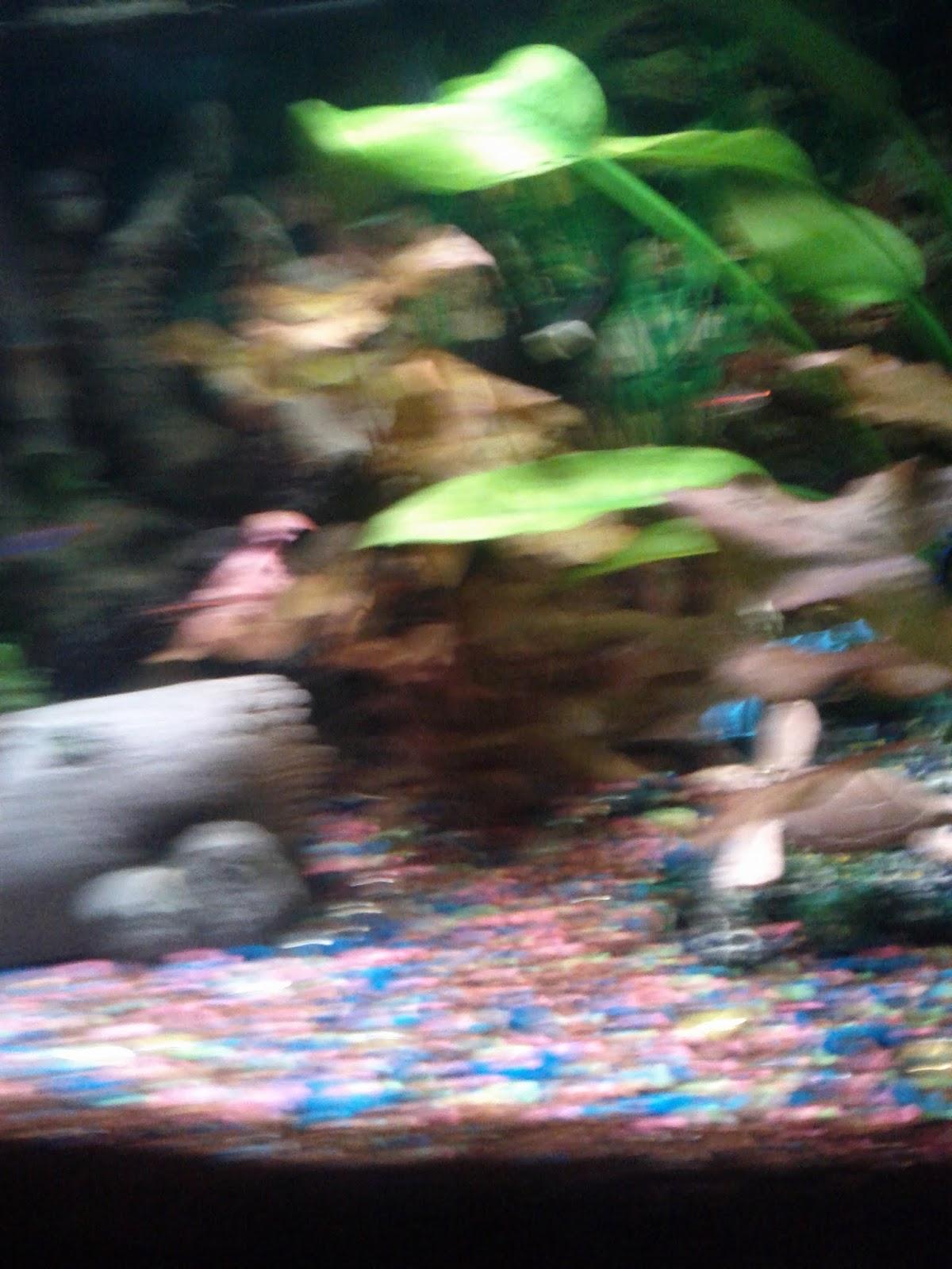 Fish - IMG_20121015_192559.jpg
