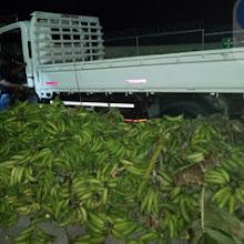 En el cruce de Vicente Noble ocupan 37 paquetes presumiblemente cocaína camión de Plátano