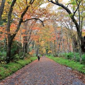知る人ぞ知るパワースポット!秋の戸隠で樹齢400年の杉が並ぶ参道や鏡池の紅葉を楽しむ