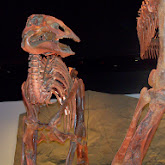Houston Museum of Natural Science - 116_2675.JPG