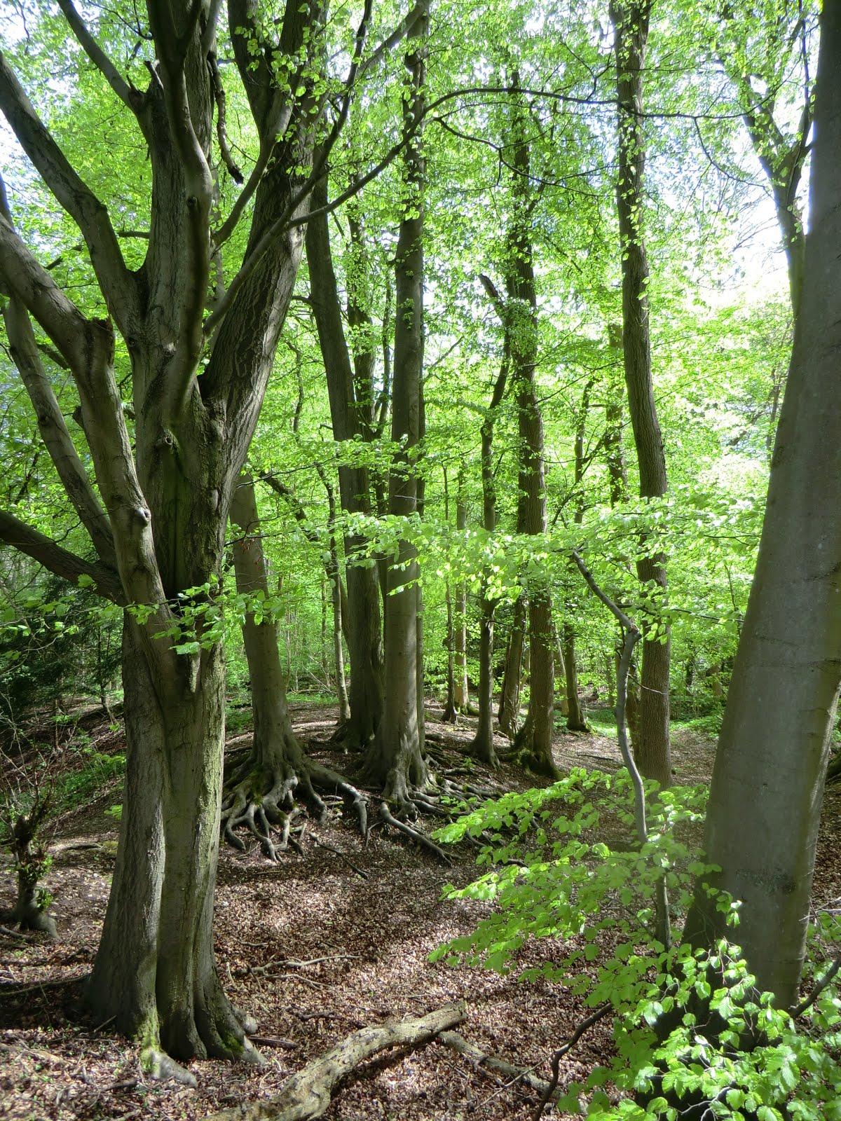CIMG8009 Marden Park Woods