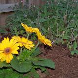 Gardening 2014 - 116_1127.JPG