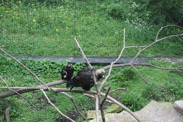 Zoo Snooze 2015 - IMG_7222.JPG