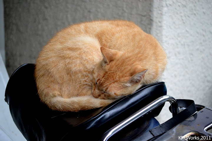 Sleeping Cat | 2011-08 | Photo