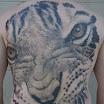 Victor's Tiger