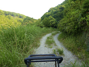 Photo: Cut grass track