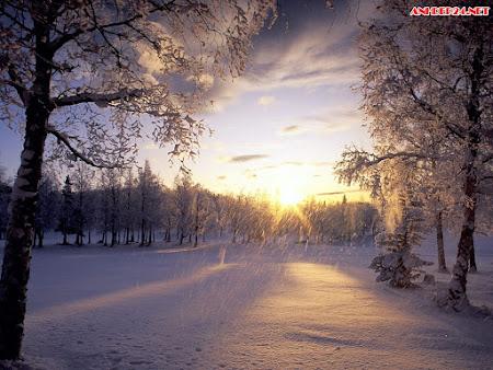 Top hình nền mùa đông đẹp nhất thế giới full HD Phần 1