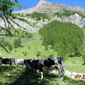 Italy: Laghi Alpini Hike 7/11/2002