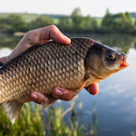 20140510_Fishing_Stara_Moshchanytsia_010.jpg