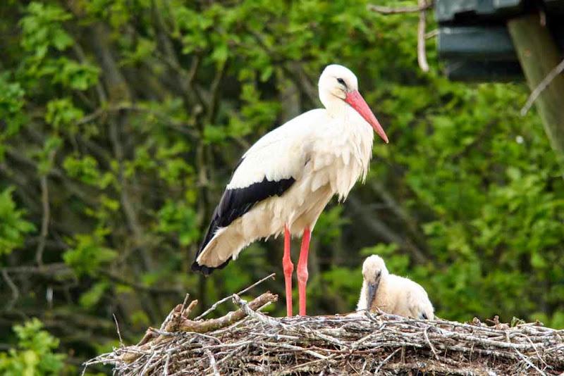Vogels en dieren - IMG_7264.JPG