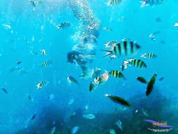 explore-pulau-pramuka-olp-15-16-06-2013-16