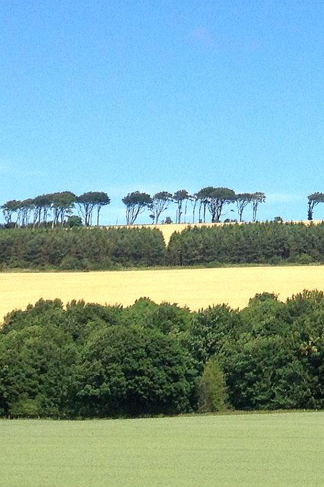 Bäume am Horizont bei Coldingham