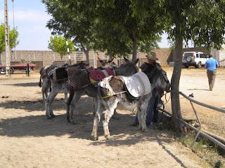burros para los niños